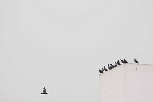 """if birds of a feather flock Birds of a feather flock together chad norris october 14, 2014 uncategorized leave a comment most clichés drive me crazy """"time flies"""" """"good things come to those who wait"""" """"a penny saved is a penny earned"""" we've heard so many of them it gets a little annoying."""
